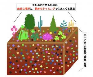 自然栽培 雑草 土を進化させる